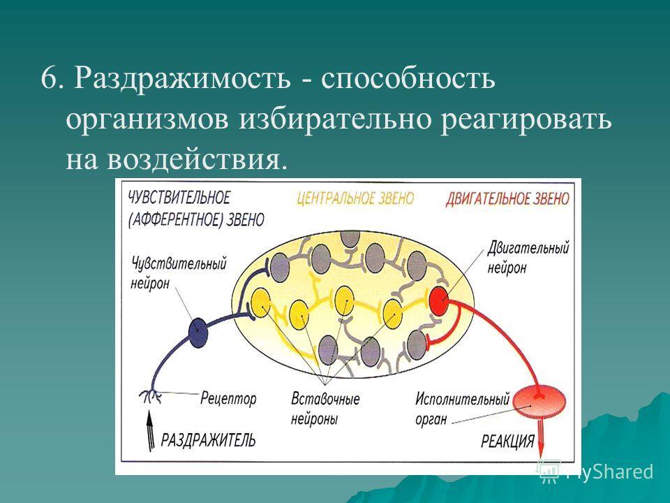 6. Раздражимость - способность организмов избирательно реагировать на воздействия.