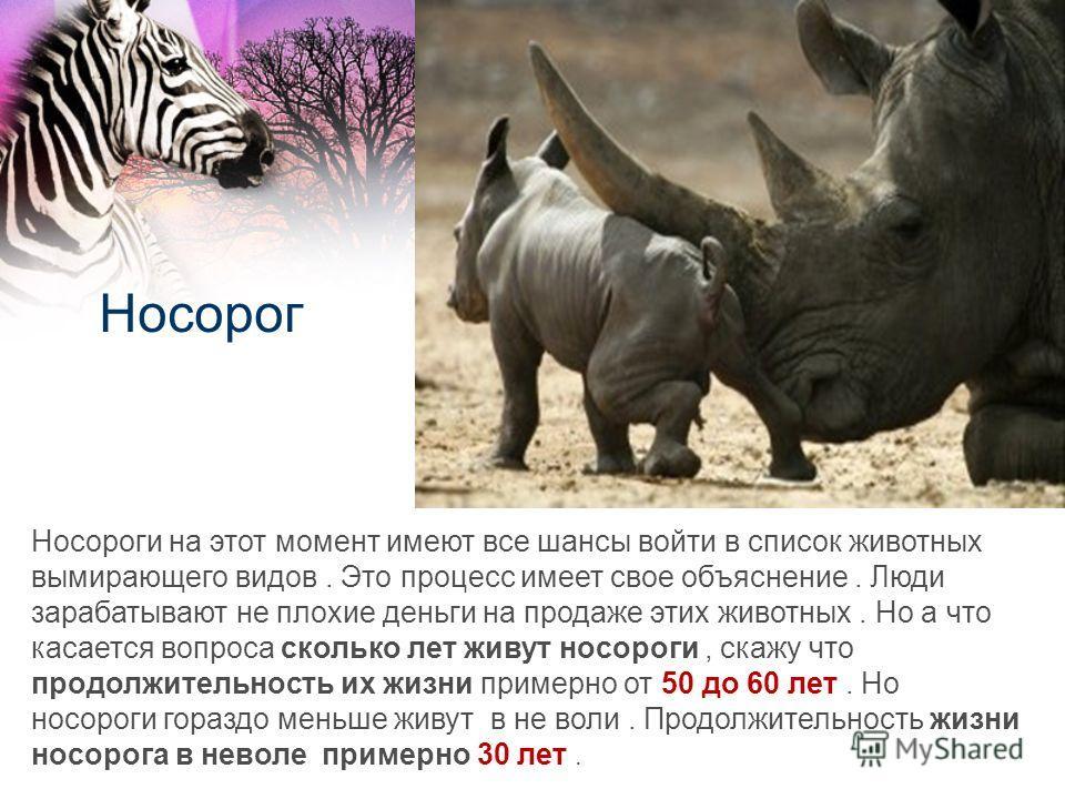 Носорог Носороги на этот момент имеют все шансы войти в список животных вымирающего видов. Это процесс имеет свое объяснение. Люди зарабатывают не плохие деньги на продаже этих животных. Но а что касается вопроса сколько лет живут носороги, скажу что