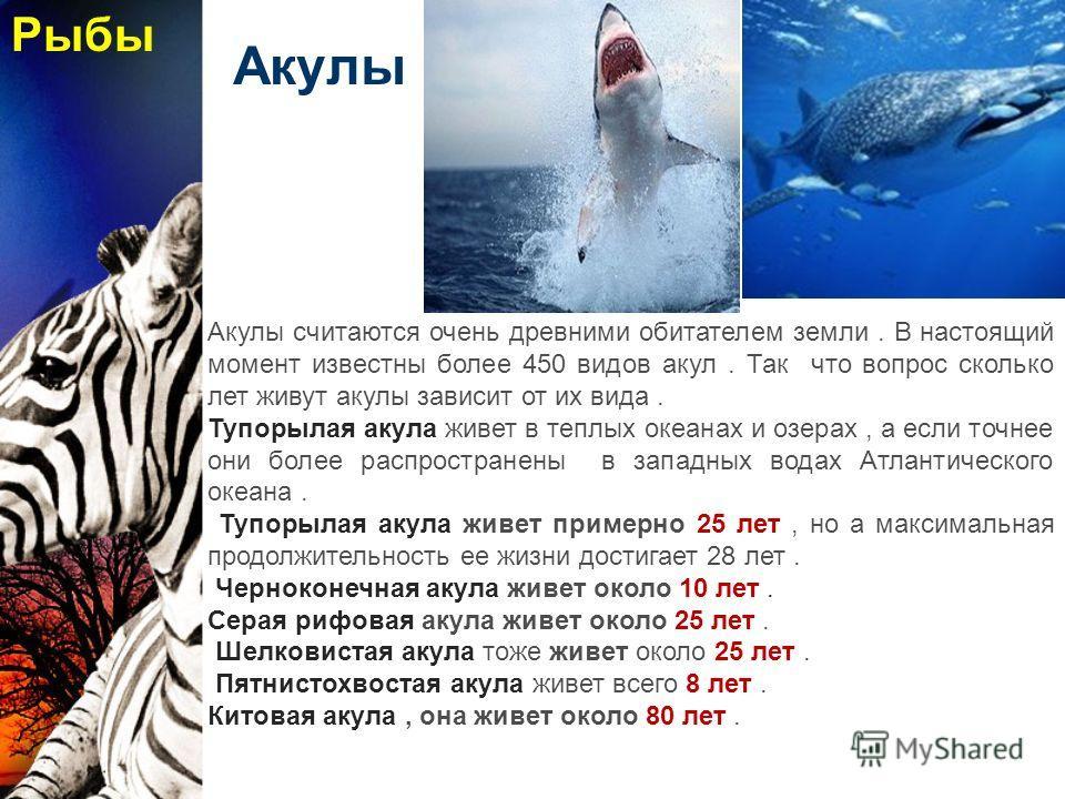 Акулы Акулы считаются очень древними обитателем земли. В настоящий момент известны более 450 видов акул. Так что вопрос сколько лет живут акулы зависит от их вида. Тупорылая акула живет в теплых океанах и озерах, а если точнее они более распространен