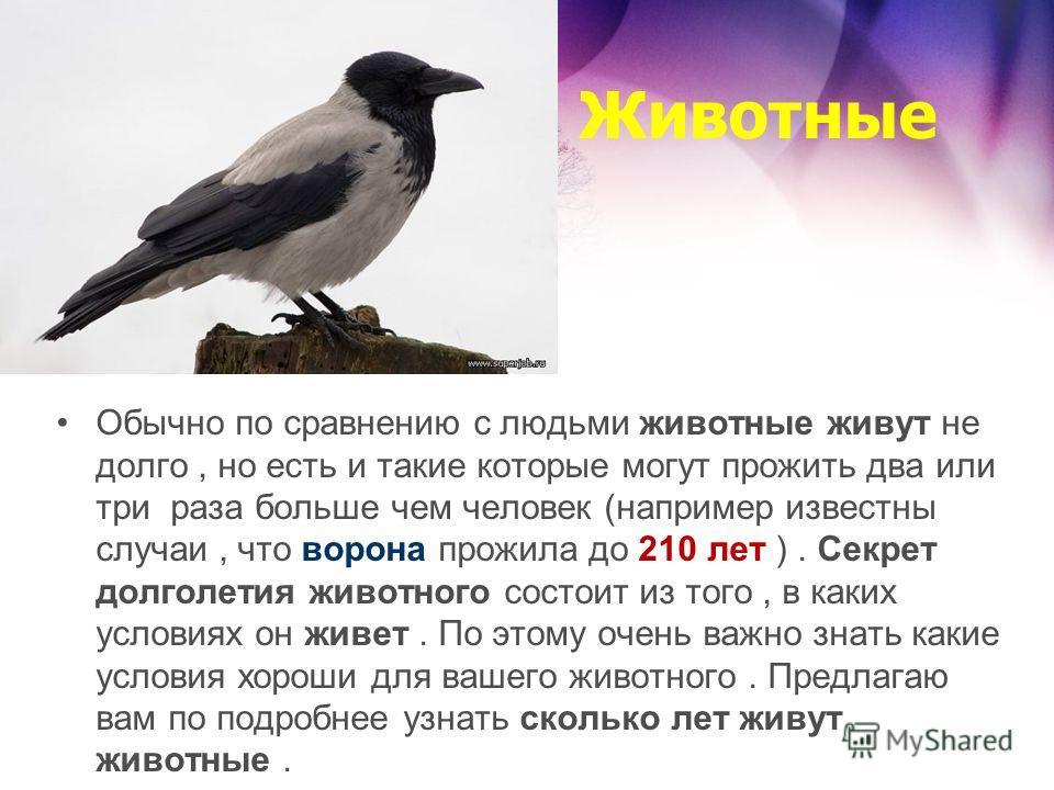 Животные Обычно по сравнению с людьми животные живут не долго, но есть и такие которые могут прожить два или три раза больше чем человек (например известны случаи, что ворона прожила до 210 лет ). Секрет долголетия животного состоит из того, в каких