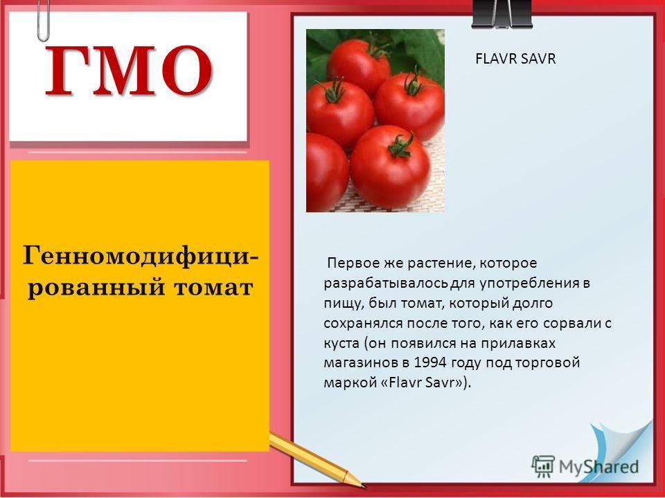 ГМО Генномодифици- рованный томат FLAVR SAVR Первое же растение, которое разрабатывалось для употребления в пищу, был томат, который долго сохранялся после того, как его сорвали с куста (он появился на прилавках магазинов в 1994 году под торговой мар