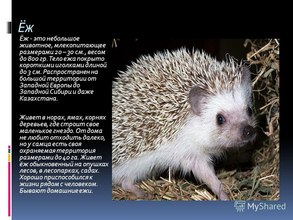 Ёж Ёж - это небольшое животное, млекопитающее размерами 20 – 30 см., весом до 800 гр. Тело ежа покрыто короткими иголками длиной до 3 см. Распространен на большой территории от Западной Европы до Западной Сибири и даже Казахстана. Живет в норах, ямах