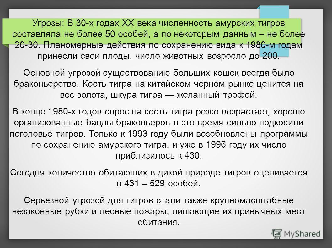 Угрозы: В 30-х годах XX века численность амурских тигров составляла не более 50 особей, а по некоторым данным – не более 20-30. Планомерные действия по сохранению вида к 1980-м годам принесли свои плоды, число животных возросло до 200. Основной угроз
