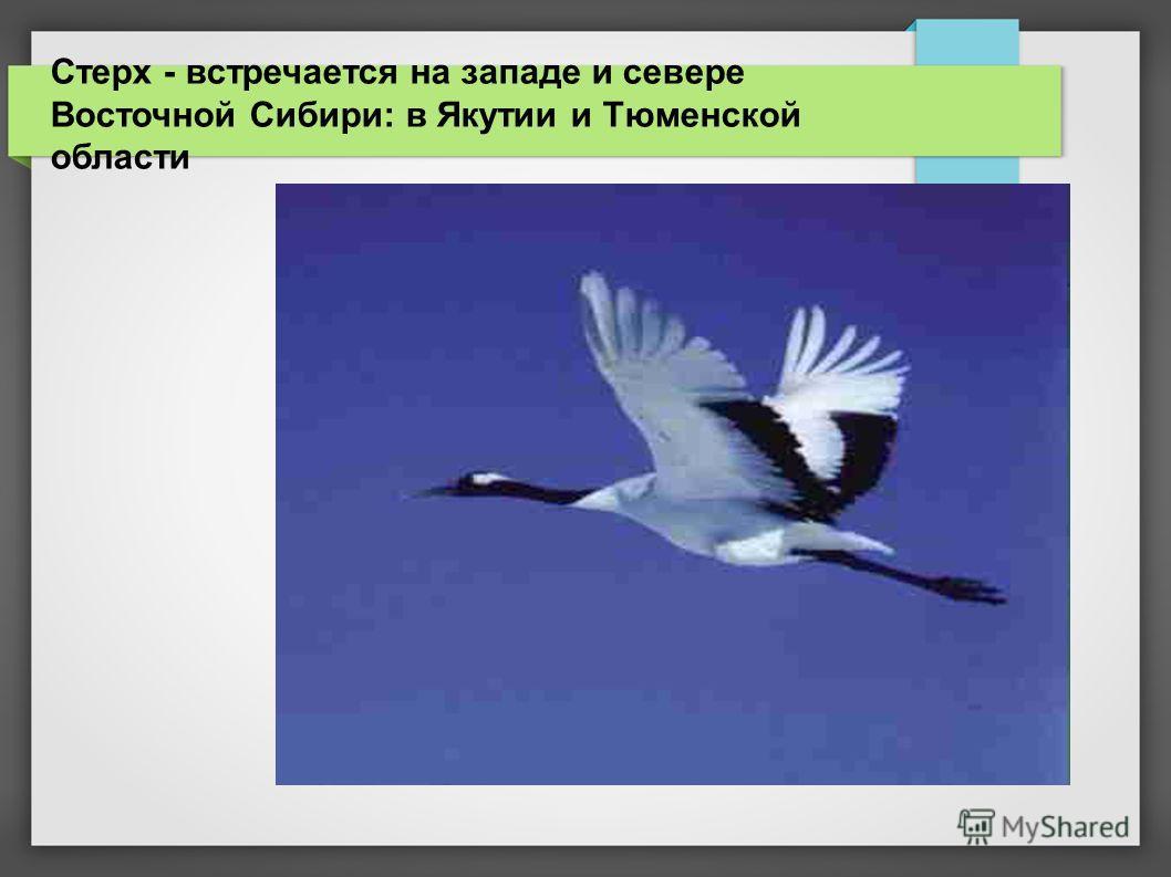 Стерх - встречается на западе и севере Восточной Сибири: в Якутии и Тюменской области