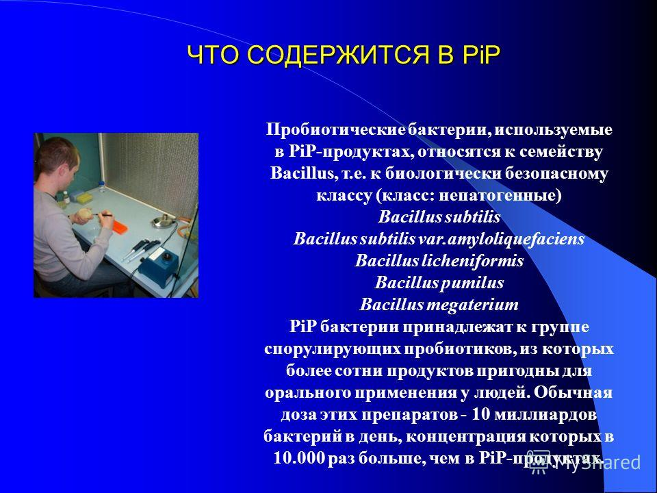 ЧТО СОДЕРЖИТСЯ В PiP Пробиотические бактерии, используемые в PiP-продуктах, относятся к семейству Bacillus, т.е. к биологически безопасному классу (класс: непатогенные) Bacillus subtilis Bacillus subtilis var.amyloliquefaciens Bacillus licheniformis