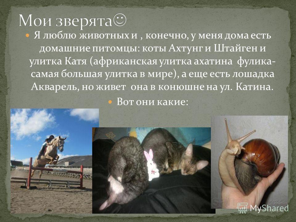Я люблю животных и, конечно, у меня дома есть домашние питомцы: коты Ахтунг и Штайген и улитка Катя (африканская улитка ахатина фулика- самая большая улитка в мире), а еще есть лошадка Акварель, но живет она в конюшне на ул. Катина. Вот они какие:
