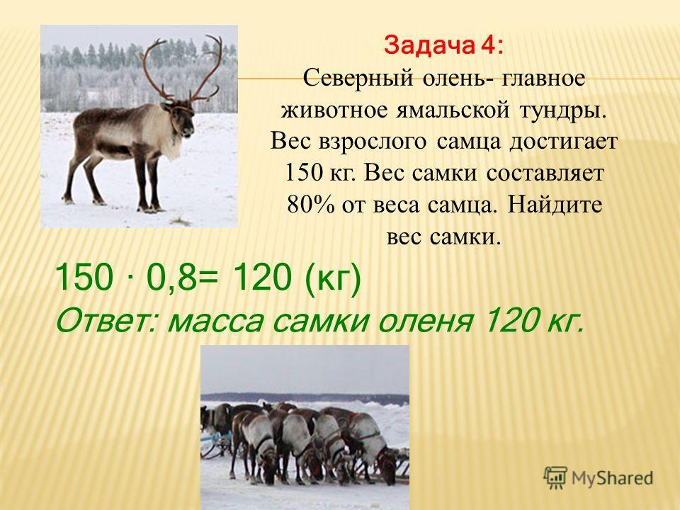 Задача 4: Северный олень- главное животное ямальской тундры. Вес взрослого самца достигает 150 кг. Вес самки составляет 80% от веса самца. Найдите вес самки. 150 0,8= 120 (кг) Ответ: масса самки оленя 120 кг.