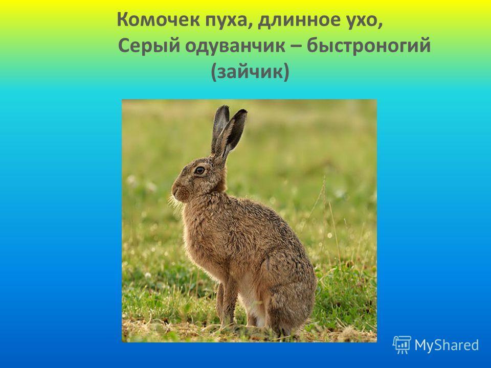 Комочек пуха, длинное ухо, Серый одуванчик – быстроногий (зайчик)