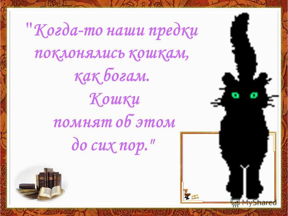 Когда-то наши предки поклонялись кошкам, как богам. Кошки помнят об этом до сих пор.
