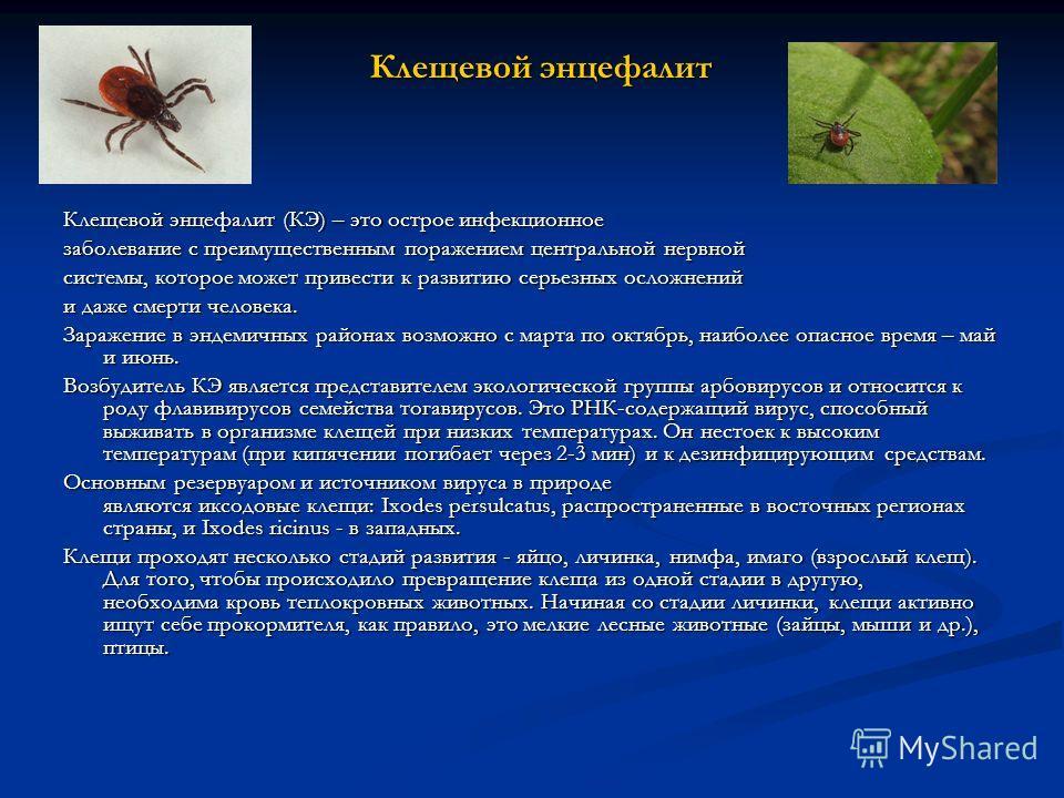Клещевой энцефалит Клещевой энцефалит (КЭ) – это острое инфекционное заболевание с преимущественным поражением центральной нервной системы, которое может привести к развитию серьезных осложнений и даже смерти человека. Заражение в эндемичных районах