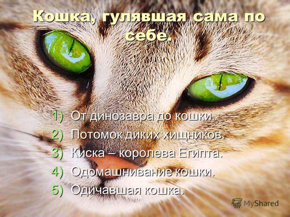 Кошка, гулявшая сама по себе. 1)От динозавра до кошки. 2)Потомок диких хищников. 3)Киска – королева Египта. 4)Одомашнивание кошки. 5)Одичавшая кошка.