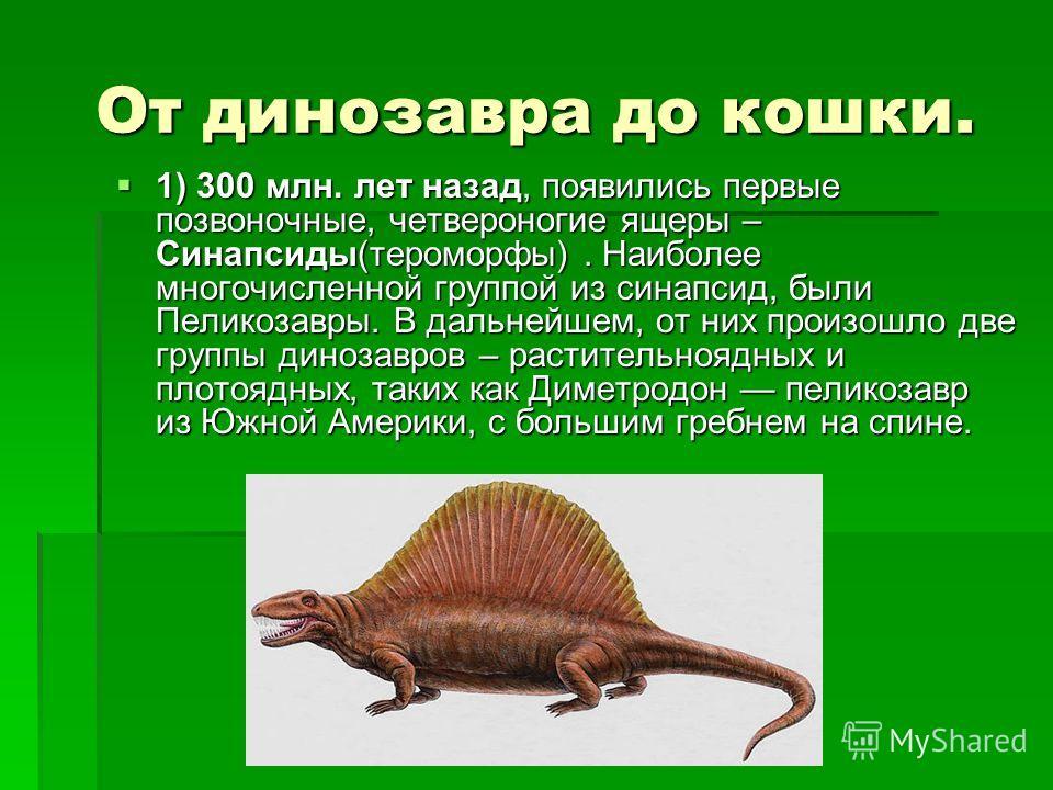 От динозавра до кошки. 1) 300 млн. лет назад, появились первые позвоночные, четвероногие ящеры – Синапсиды(тероморфы). Наиболее многочисленной группой из синапсис, были Пеликозавры. В дальнейшем, от них произошло две группы динозавров – растительнояд