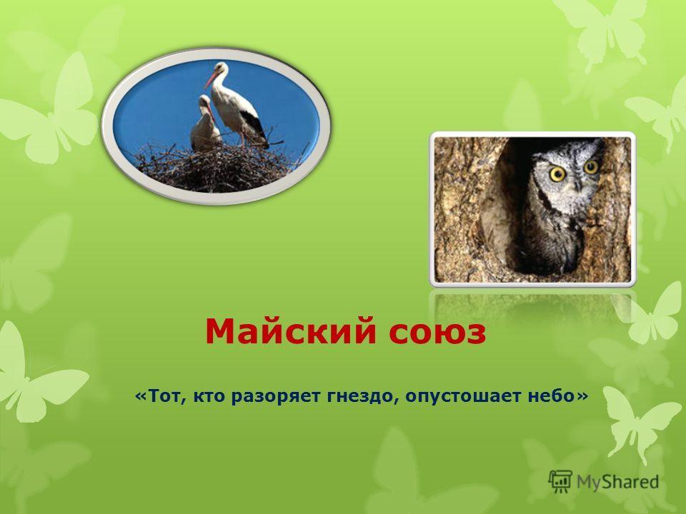 Майский союз «Тот, кто разоряет гнездо, опустошает небо»
