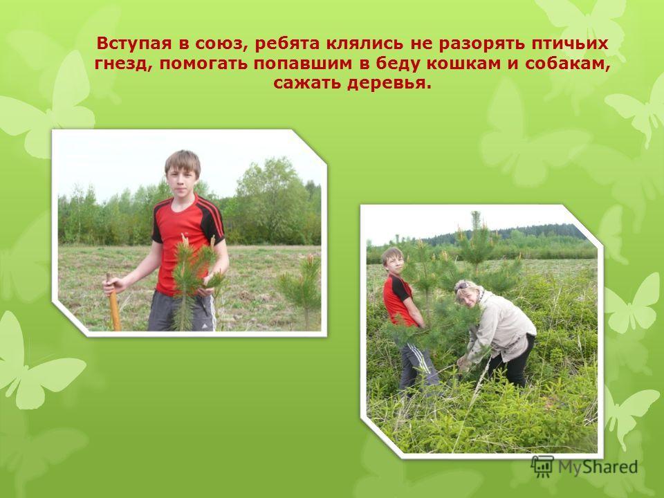 Вступая в союз, ребята клялись не разорять птичьих гнезд, помогать попавшим в беду кошкам и собакам, сажать деревья.