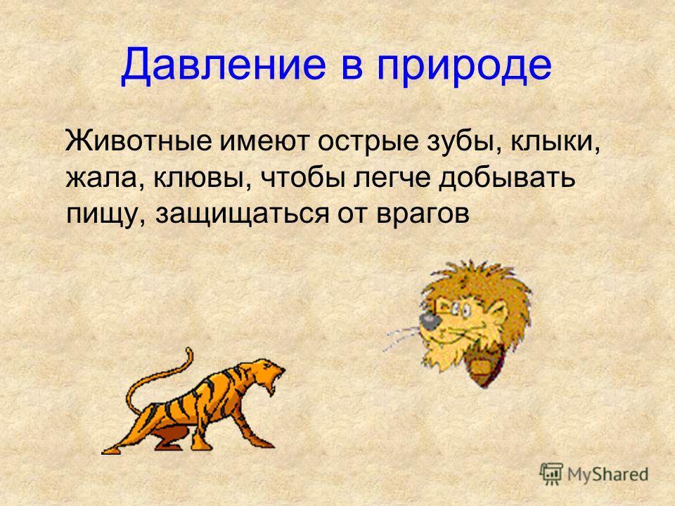 Давление в природе Животные имеют острые зубы, клыки, жала, клювы, чтобы легче добывать пищу, защищаться от врагов
