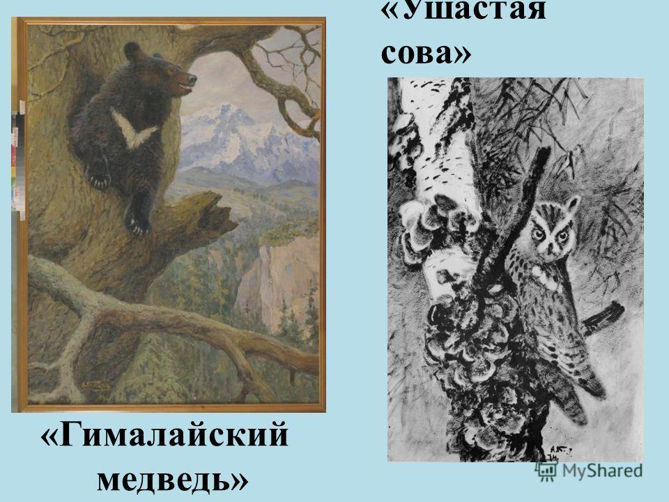 «Ушастая сова» «Гималайский медведь»