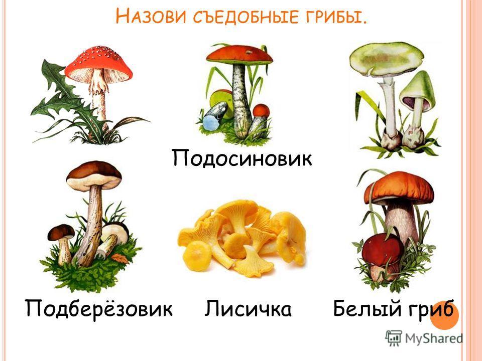 Н АЗОВИ СЪЕДОБНЫЕ ГРИБЫ. Подосиновик Подберёзовик ЛисичкаБелый гриб