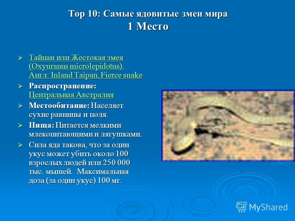Top 10: Самые ядовитые змеи мира 1 Место Тайпан или Жестокая змея (Oxyuranus microlepidotus). Англ: Inland Taipan, Fierce snake Тайпан или Жестокая змея (Oxyuranus microlepidotus). Англ: Inland Taipan, Fierce snake Тайпан или Жестокая змея (Oxyuranus