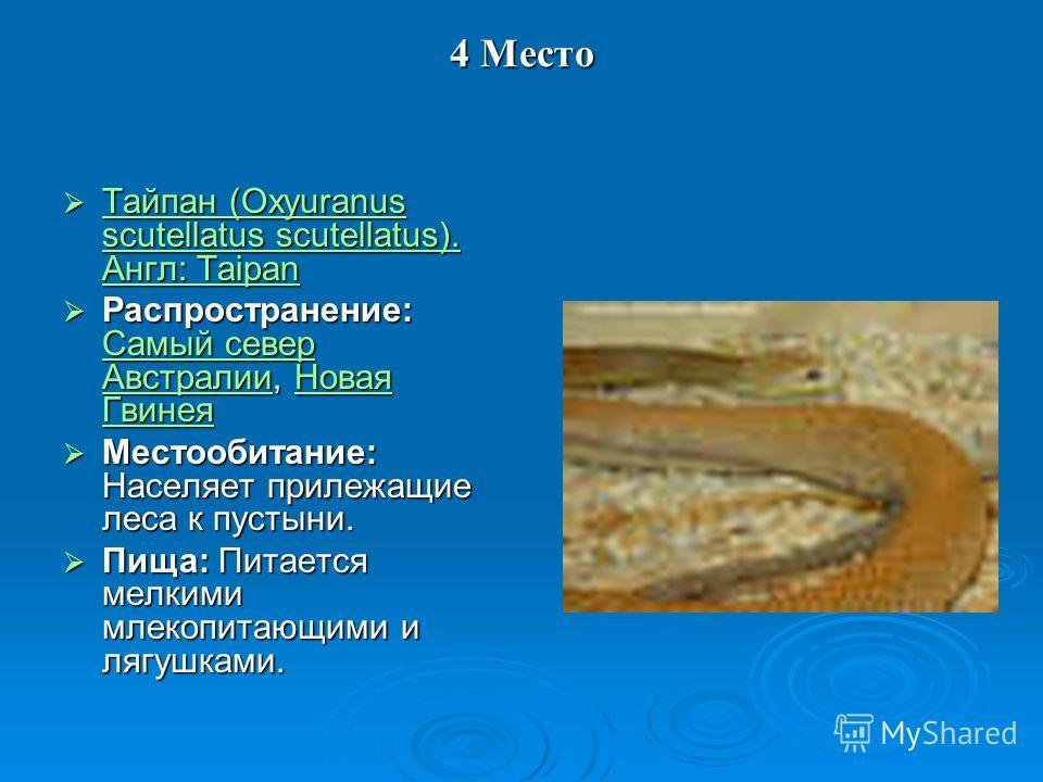 4 Место Тайпан (Oxyuranus scutellatus scutellatus). Англ: Taipan Тайпан (Oxyuranus scutellatus scutellatus). Англ: Taipan Тайпан (Oxyuranus scutellatus scutellatus). Англ: Taipan Тайпан (Oxyuranus scutellatus scutellatus). Англ: Taipan Распространени