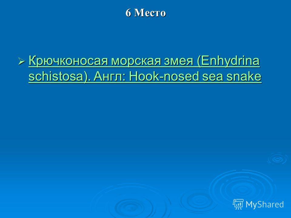 6 Место Крючконосая морская змея (Enhydrina schistosa). Англ: Hook-nosed sea snake Крючконосая морская змея (Enhydrina schistosa). Англ: Hook-nosed sea snake Крючконосая морская змея (Enhydrina schistosa). Англ: Hook-nosed sea snake Крючконосая морск