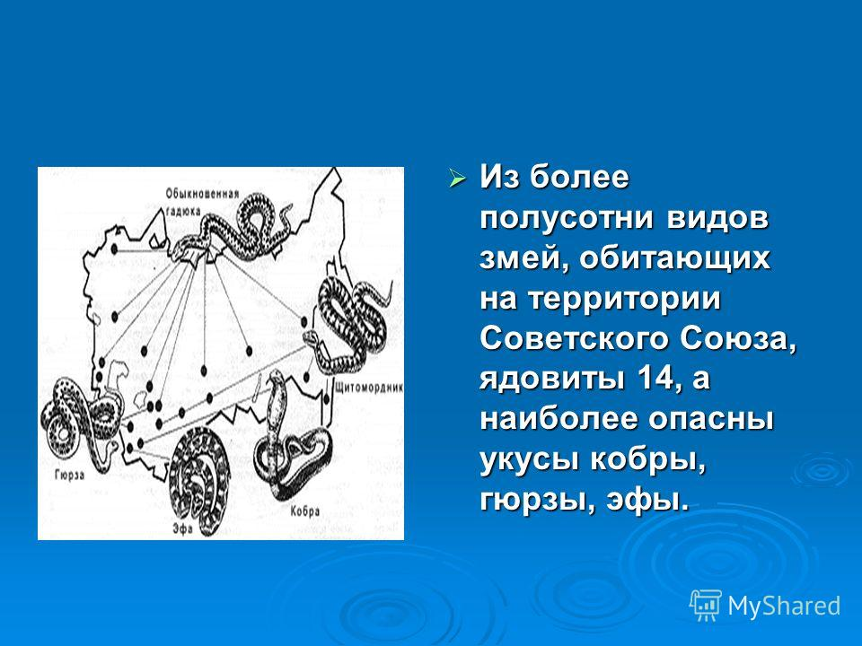 Из более полусотни видов змей, обитающих на территории Советского Союза, ядовиты 14, а наиболее опасны укусы кобры, гюрзы, эфы. Из более полусотни видов змей, обитающих на территории Советского Союза, ядовиты 14, а наиболее опасны укусы кобры, гюрзы,