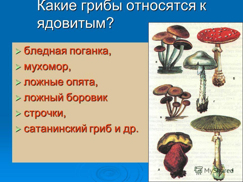Какие грибы относятся к ядовитым? бледная поганка, бледная поганка, мухомор, мухомор, ложные опята, ложные опята, ложный боровик ложный боровик строчки, строчки, сатанинский гриб и др. сатанинский гриб и др.