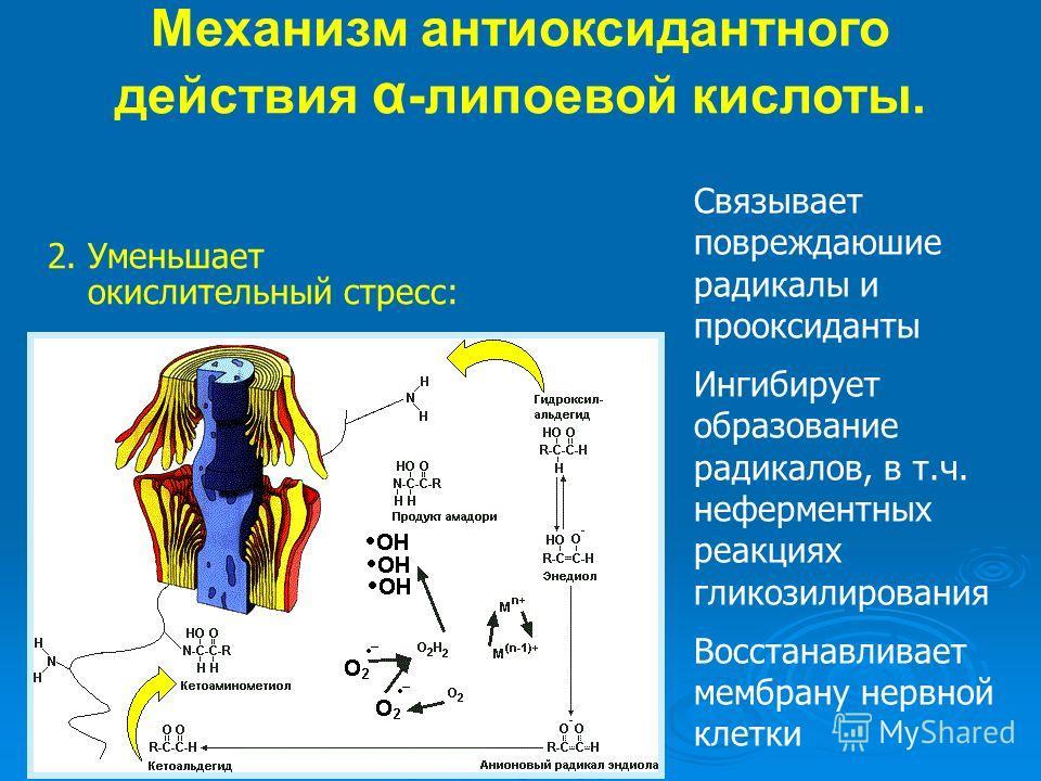 Связывает повреждаюшие радикалы и прооксиданты Ингибирует образование радикалов, в т.ч. неферментных реакциях гликозилирования Восстанавливает мембрану нервной клетки 2. Уменьшает окислительный стресс: Механизм антиоксидантного действия α -липоевой к