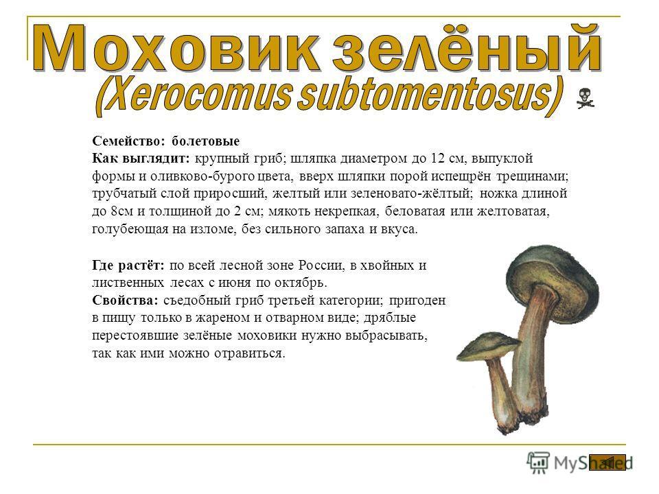 Семейство: болтовые Как выглядит: крупный гриб; шляпка диаметром до 12 см, выпуклой формы и оливково-бурого цвета, вверх шляпки порой испещрён трещинами; трубчатый слой приросший, желтый или зеленовато-жёлтый; ножка длиной до 8 см и толщиной до 2 см;