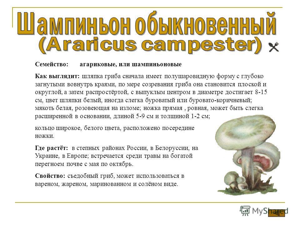 Семейство: агариковые, или шампиньоновые Как выглядит: шляпка гриба сначала имеет полушаровидную форму с глубоко загнутыми вовнутрь краями, по мере созревания гриба она становится плоской и округлой, а затем распростёртой, с выпуклым центром в диамет