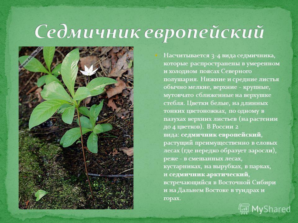 Насчитывается 3-4 вида седмичника, которые распространены в умеренном и холодном поясах Северного полушария. Нижние и средние листья обычно мелкие, верхние - крупные, мутовчато сближенные на верхушке стебля. Цветки белые, на длинных тонких цветоножка