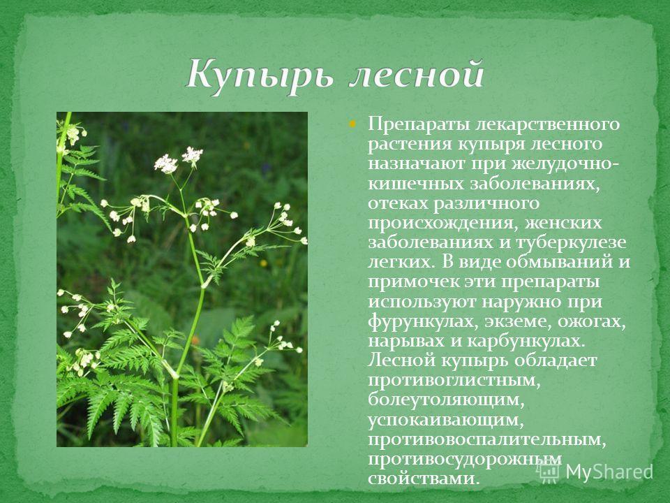Препараты лекарственного растения купыря лесного назначают при желудочно- кишечных заболеваниях, отеках различного происхождения, женских заболеваниях и туберкулезе легких. В виде обмываний и примочек эти препараты используют наружно при фурункулах,