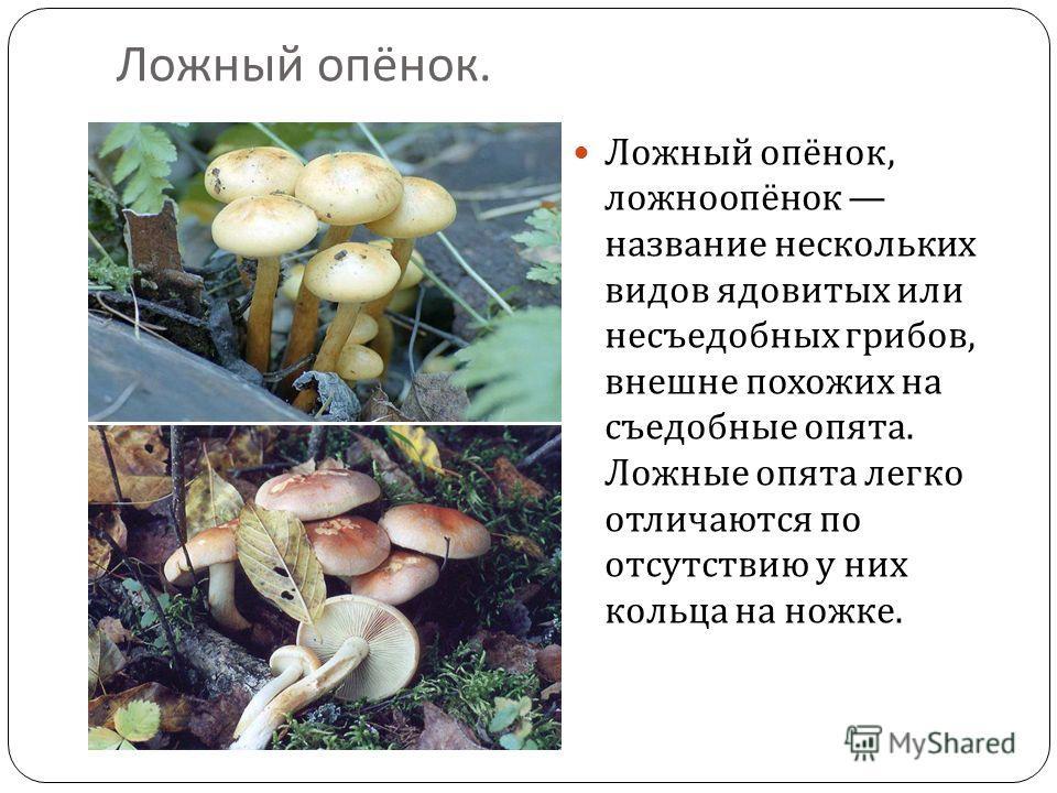 Ложный опёнок. Ложный опёнок, ложноопёнок название нескольких видов ядовитых или несъедобных грибов, внешне похожих на съедобные опята. Ложные опята легко отличаются по отсутствию у них кольца на ножке.