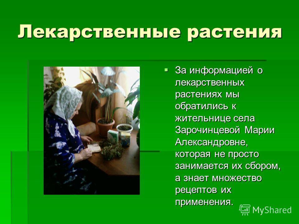 Лекарственные растения За информацией о лекарственных растениях мы обратились к жительнице села Зарочинцевой Марии Александровне, которая не просто занимается их сбором, а знает множество рецептов их применения. За информацией о лекарственных растени