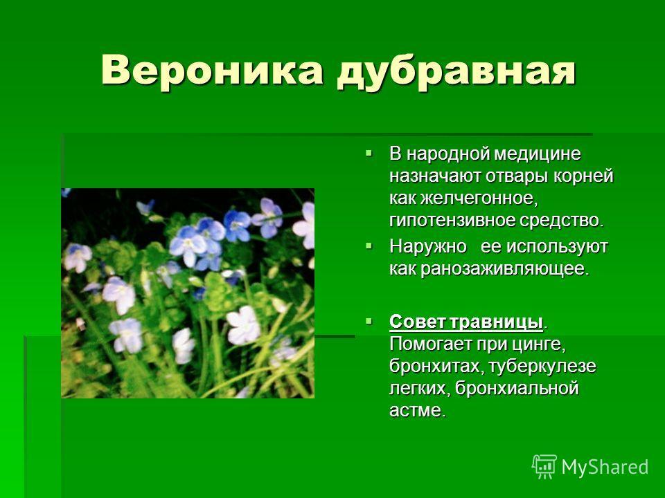 Вероника дубравная В народной медицине назначают отвары корней как желчегонное, гипотензивное средство. В народной медицине назначают отвары корней как желчегонное, гипотензивное средство. Наружно ее используют как ранозаживляющее. Наружно ее использ