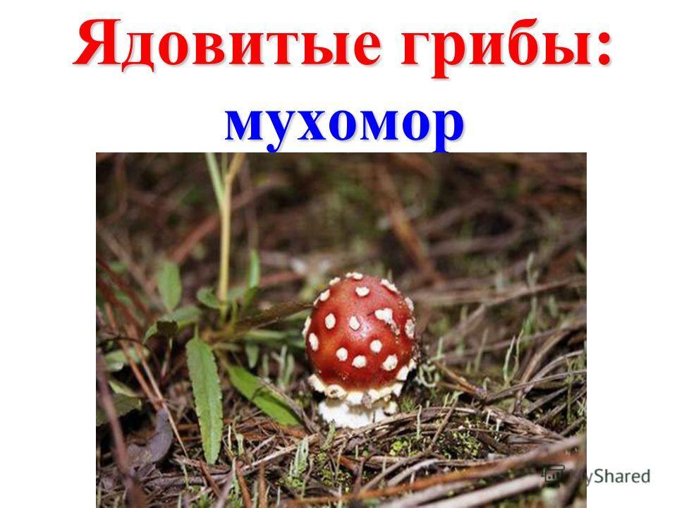 Ядовитые грибы: мухомор