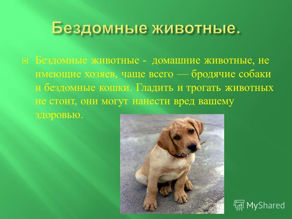 Бездомные животные - домашние животные, не имеющие хозяев, чаще всего бродячие собаки и бездомные кошки. Гладить и трогать животных не стоит, они могут нанести вред вашему здоровью.