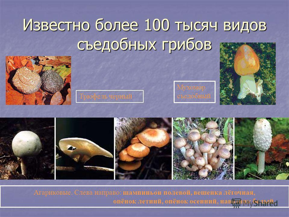 Известно более 100 тысяч видов съедобных грибов Трюфель черный Мухомор съедобный Агариковые. Слева направо: шампиньон полевой, вешенка лёгочная, опёнок летний, опёнок осенний, навозник белый.