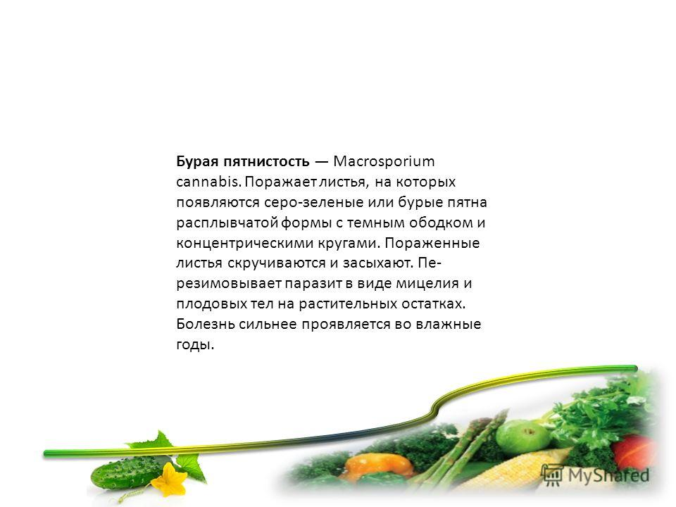 Бурая пятнистость Macrosporium cannabis. Поражает листья, на которых появляются серо-зеленые или бурые пятна расплывчатой формы с темним ободком и концентрическими кругами. Пораженные листья скручиваются и засыхают. Пе резимовывает паразит в виде ми