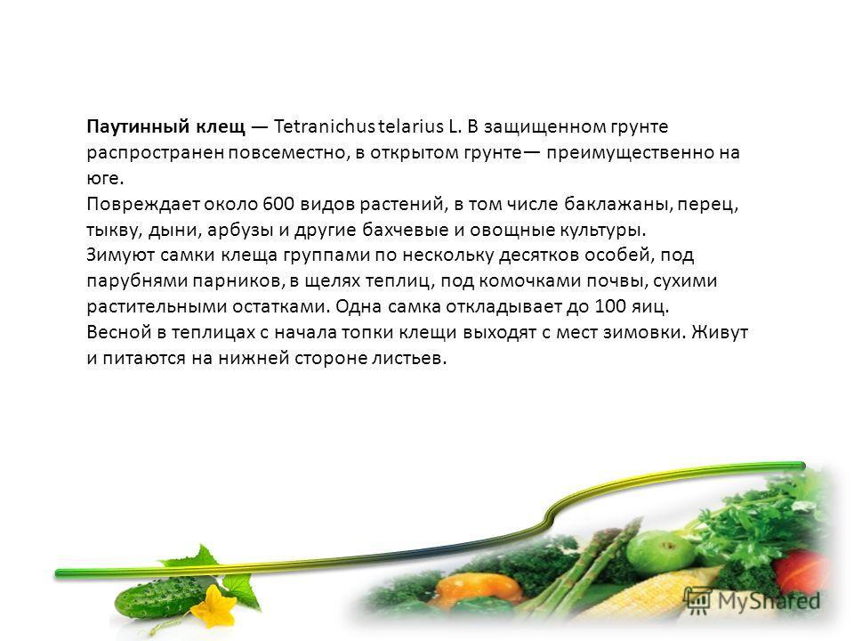 Паутинный клещ Tetranichus telarius L. В защищенном грунте распространен повсеместно, в открытом грунте преимущественно на юге. Повреждает около 600 видов растений, в том числе баклажаны, перец, тыкву, дыни, арбузы и другие бахчевые и овощные куль