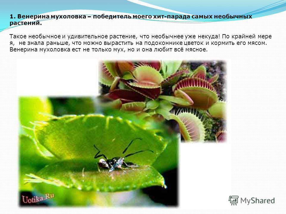 2. Раффлезия Арнольди вполне заслуживает второго места в хит-параде самых необычных и удивительных растений. У этого цветка нет ни листьев, ни корней, а бутоны похожи на кочан капусты. Это растение-паразит, которое может расти только совместно с друг