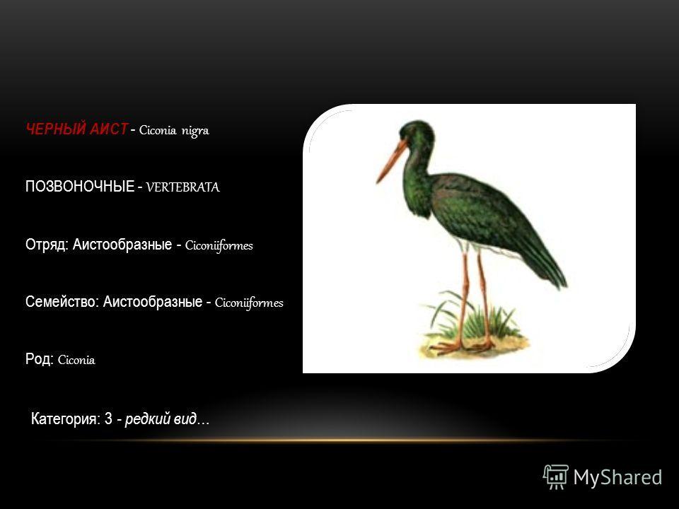 ЧЕРНЫЙ АИСТ - Ciconia nigra ПОЗВОНОЧНЫЕ - VERTEBRATA Отряд: Аистообразные - Сiconiiformes Семейство: Аистообразные - Сiconiiformes Род: Ciconia Категория: 3 - редкий вид …