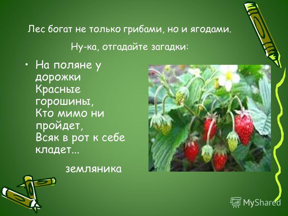 Лес богат не только грибами, но и ягодами. Ну-ка, отгадайте загадки: На поляне у дорожки Красные горошины, Кто мимо ни пройдет, Всяк в рот к себе кладет... земляника