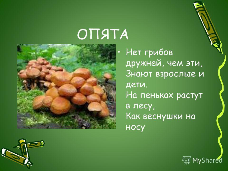 ОПЯТА Нет грибов дружней, чем эти, Знают взрослые и дети. На пеньках растут в лесу, Как веснушки на носу