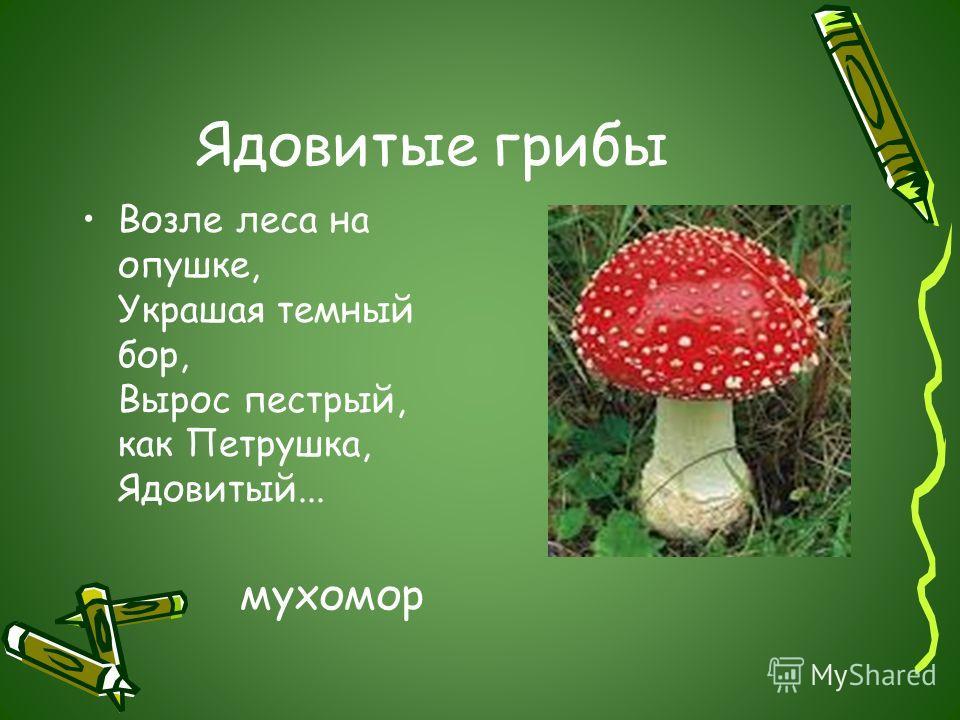 Ядовитые грибы Возле леса на опушке, Украшая темный бор, Вырос пестрый, как Петрушка, Ядовитый... мухомор