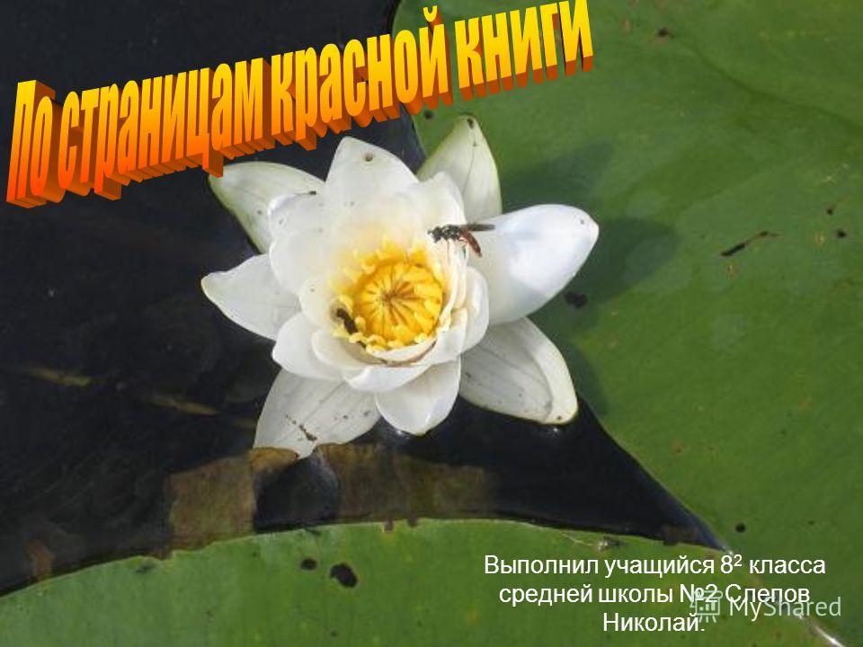 Выполнил учащийся 8 2 класса средней школы 2 Слепов Николай.