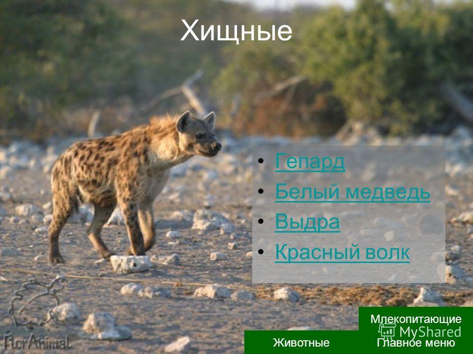 Хищные Гепард Белый медведь Выдра Красный волк Главное меню Животные Млекопитающие