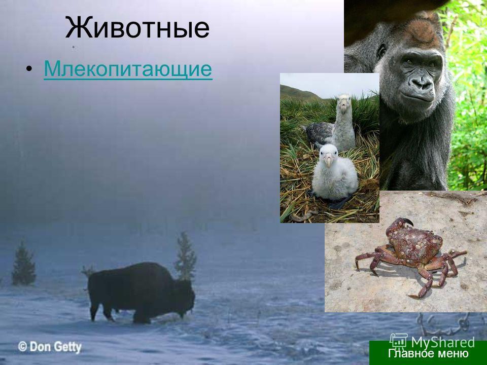 Животные Млекопитающие Главное меню
