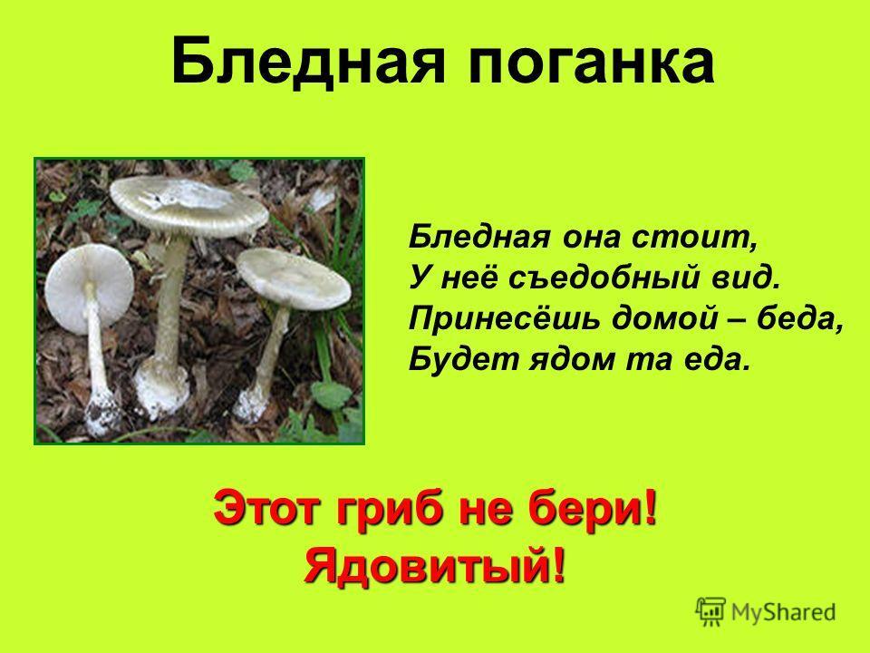 Бледная поганка Этот гриб не бери! Ядовитый! Бледная она стоит, У неё съедобный вид. Принесёшь домой – беда, Будет ядом та еда.