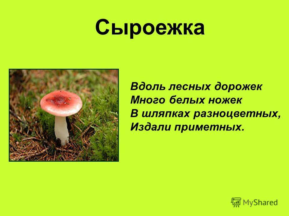 Сыроежка Вдоль лесных дорожек Много белых ножек В шляпках разноцветных, Издали приметных.