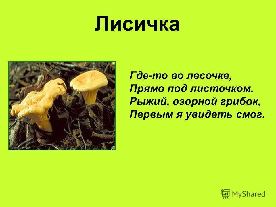 Лисичка Где-то во лесочке, Прямо под листочком, Рыжий, озорной грибок, Первым я увидеть смог.